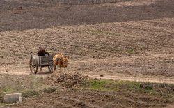 کوریای شمالی با خشکسالی دستوپنجه نرم میکند