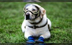 فریدا، سگ زندهیاب مشهور مکسیکویی بازنشسته شد