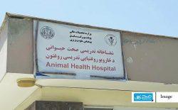 اولین مرکز عقیمسازی سگها در افغانستان