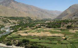حملهی طالبان در ولایت کاپیسا؛ یک نیروی امنیتی جان باخت و پنج غیر نظامی زخمی شدند
