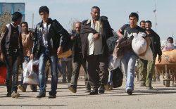 از آغاز سال روان میلادی تا کنون حدود ۳۰۰ هزار پناهجوی افغان از ایران و پاکستان بازگشتند