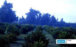 ننگرهار پایتخت «ستروس» افغانستان
