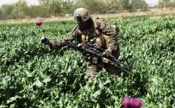 هزینهی ۹ میلیارد دالری امریکا برای مبارزهی بیثمر علیه مواد مخدر در افغانستان