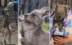 آتشسوزی در استرالیا؛ حدود ۴۸۰ میلیون حیوان تلف شدهاند