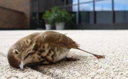 آلودگی هوا مرگ خاموش حیوانات