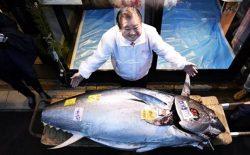 کارآفرین جاپانی ماهیای را به ارزش ۱٫۸ میلیون دالر خریداری کرد