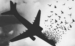 پروازی که پرپر شد