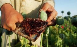 شکست امریکا و افغانستان در مبارزه با مواد مخدر