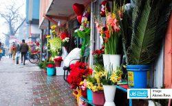 افزایش قیمت گلتازه در آستانهی والنتاین