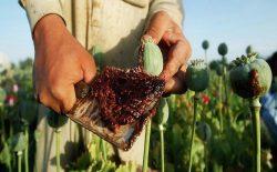 مواد مخدر؛ طلای خونین افغانستان