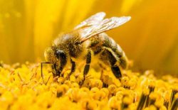 زنبور عسل باشید!