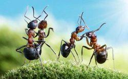 مثل مورچه نباشید