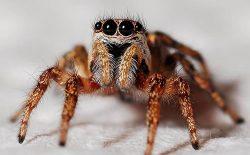مثل عنکبوت نباشید