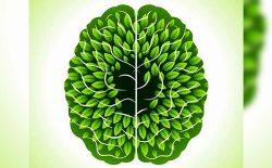 افکار سبز تان را تقویت کنید!
