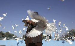 صلح پیشنیاز توسعه جوامع بشری است