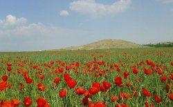شش روز تا نوروز؛ از آمادگی برای میلهی گل سرخ تا محدودیتهای کرونایی