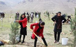 در آستانهی سال نو؛ در کابل ۵۰ درصد کمتر نهال غرس میشود
