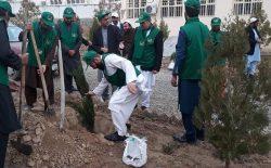 یک روز تا نوروز؛ در سال جدید ۲۵ میلیون نهال در افغانستان غرس میشود
