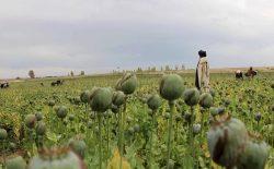 سیگار: گروه طالبان ۴۰۰ میلیون دالر از تجارت مواد مخدر درآمد دارد