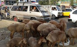 پنج روز تا عید قربان؛ وزارت صحت نگران بیشترشدن بیماران کرونایی است!