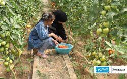 ۳۶ سبزخانه در ولایت سرپل ساخته میشود